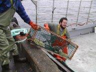 Loading traps in Southwest Nova Scotia. Photo by Derek Jones.