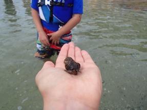 "Near ""hermit crab island"""