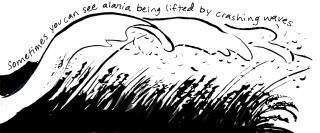 A Wave of Alaria