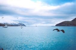 Alaskan scene in Dutch Harbour