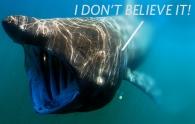 whale-shark-blog