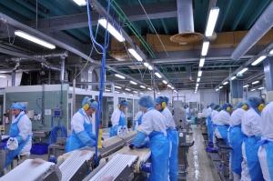 Conveyor belt belt in fish processing plant, Reykjavik, Iceland.