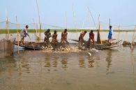 Fishing in the haor, Bangladesh