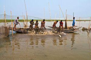 Fishing in the haor, Bangladesh