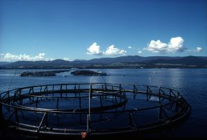 A salmon farm in Tasmania, Australia Photo: ©CSIRO